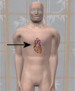 Erectile_Dysfunction_Study-HeartLocationArrow
