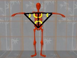 Masturbation_Causes_Skeletal_Misalignment-ErectSkeletonArmHipAngles