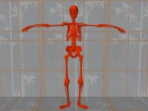 Masturbation_Causes_Skeletal_Misalignment-NormalErectSkeleton
