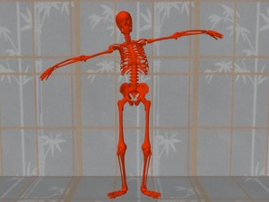 Masturbation_Causes_Skeletal_Misalignment-SkeletonUpperBodyLean