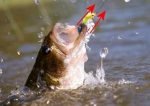 Fish_Hooked_03-HookedFishHookPullingDirection