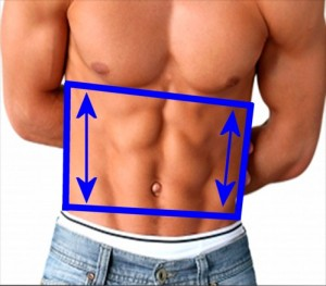 Gay_Torso_Confirms_Asymmetry-LeftSideTrapezoidShorter
