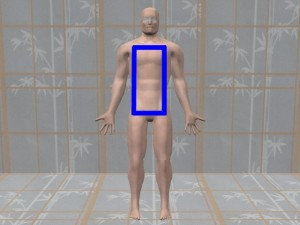 Gay_Torso_Confirms_Asymmetry-RectangleOnModelTorso