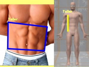 Gay_Torso_Confirms_Asymmetry-RightSideModelGayCompare