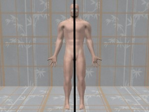 Gay_Torso_Confirms_Asymmetry-SymmetricModelBodyCenterline