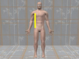 Gay_Torso_Confirms_Asymmetry-TallRightSideModelFrontView