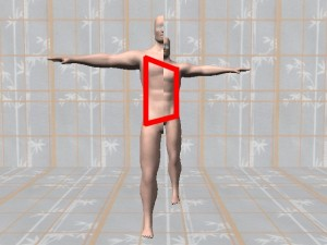 Gay_Torso_Confirms_Asymmetry-TrapezoidOnComputerModel