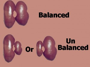 Homosexual_Lopsided_Body-BalancedUnbalancedKidneys