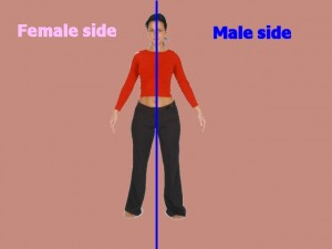 Homosexual_Lopsided_Body-MaleFemaleBoundary