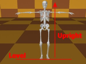 Homosexual_Lopsided_Body-SkeletonLevelUpright