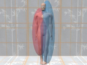 Male_Full_Body_Analysis_18-ModelSmallRightTesticle