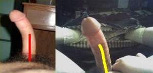 The_Left_Pointing_Penis_Analysis_13-LowerPenisCompare
