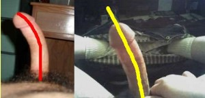 The_Left_Pointing_Penis_Analysis_13-UpperPenisCompare