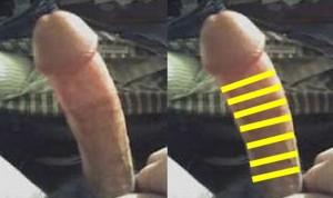 The_Left_Pointing_Penis_Analysis_13-UpperPenisLargerDiameter